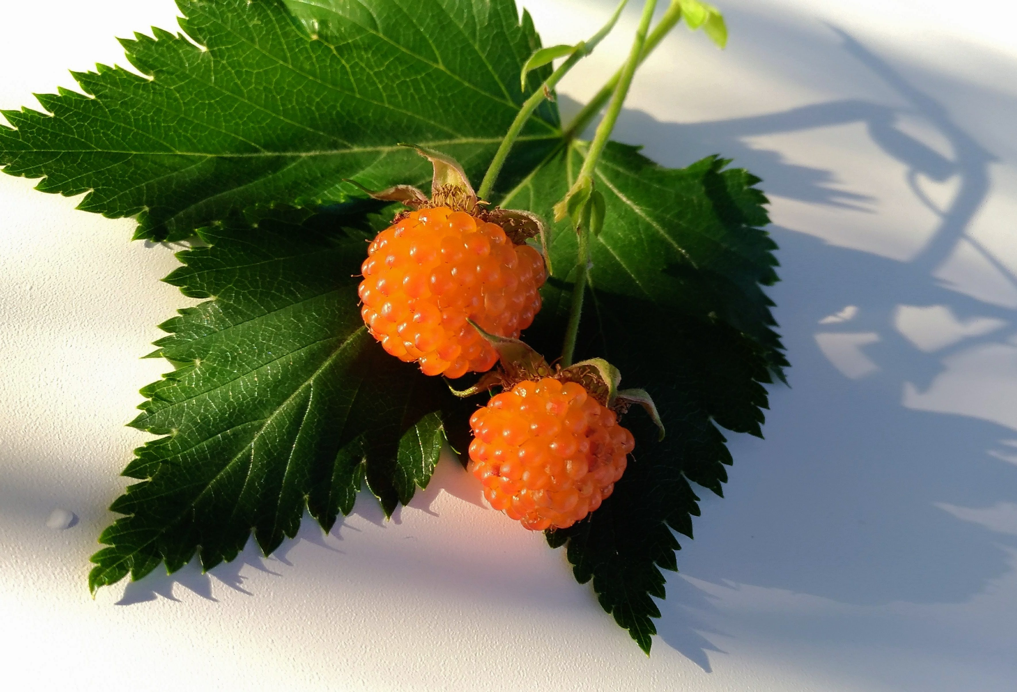 yellow-raspberry